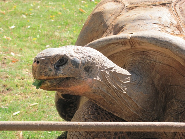 Tortoise 055